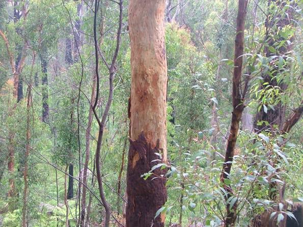Forest 006 blog July 09