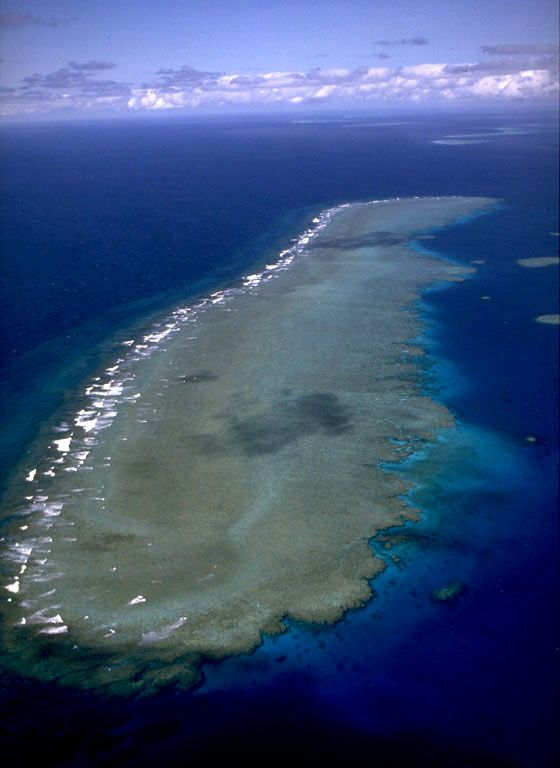 Outer Barrier Reef, Photograph by Walter Starck