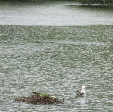 Birmingham duck pon