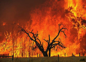 Image courtesy of http://bushfirefront.com.au