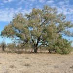 Campaigning for National Parks is Against Australian's Bush Ethos: Part 1, Buying Back Tooralee