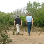 After 10 Years, Still No Evidence to Convict Herbicide in Mackay Mangrove Dieback