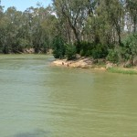 How to Save the Red Gum Forests: A Note to Mr Kelvin Thomson MP