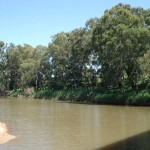 Bunyips in Australian Rivers (Part 1)