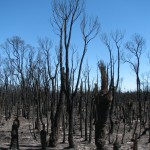 The Wilderness Society and Bushfire Management