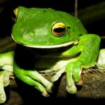 How Much Should One Frog Eat?