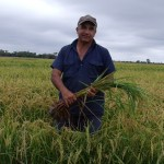 Rice Suits the Murray Darling Basin