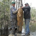 Black Water Kills Tens of Thousands of Murray Cod
