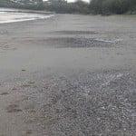 Beach Mounds Not Middens