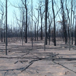 National Parks Fueled Summer Bushfires in the Pilliga