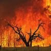 Image courtesy of http://bushfirefront.com.au