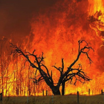Philosophising on Bushfires: A Note from David Ward
