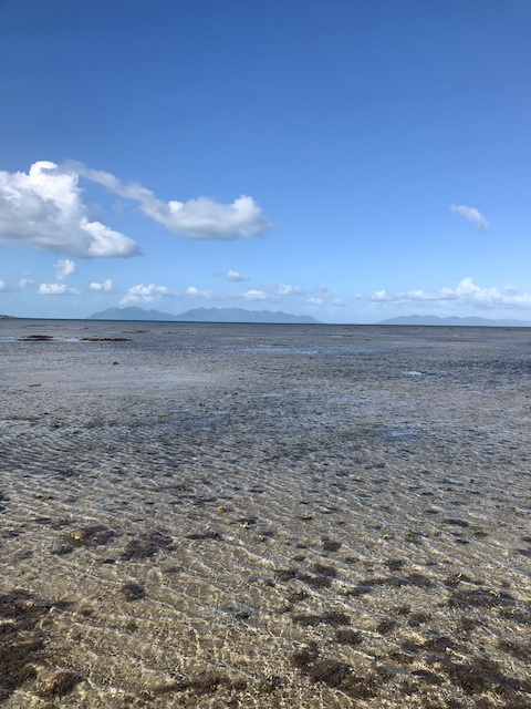 After the mud flat there was reef flat, with coarse sand and lots of Halimeda. All healthy, and typical of an inner Great Barrier Reef.
